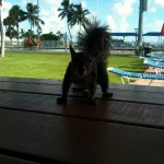 Squirrel Attack - Florida Summer 2010